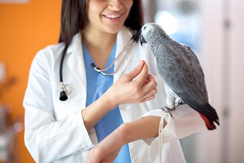 Veterinario-animali-esotici-milano