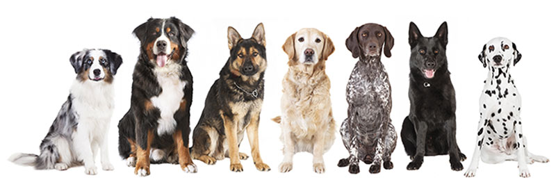 piani salute cane cucciolo adulto senior