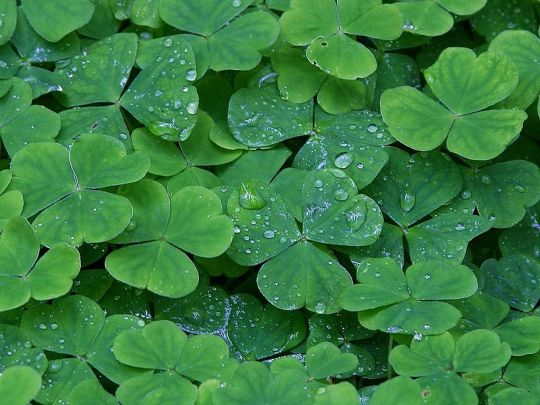 Three times around and back to the center might make you a Clover lover as well. Image courtesy of Wikipedia.