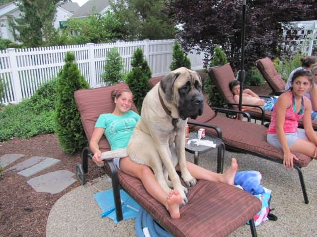 big-dog-5