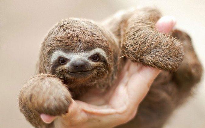 cutest-baby-animals-32