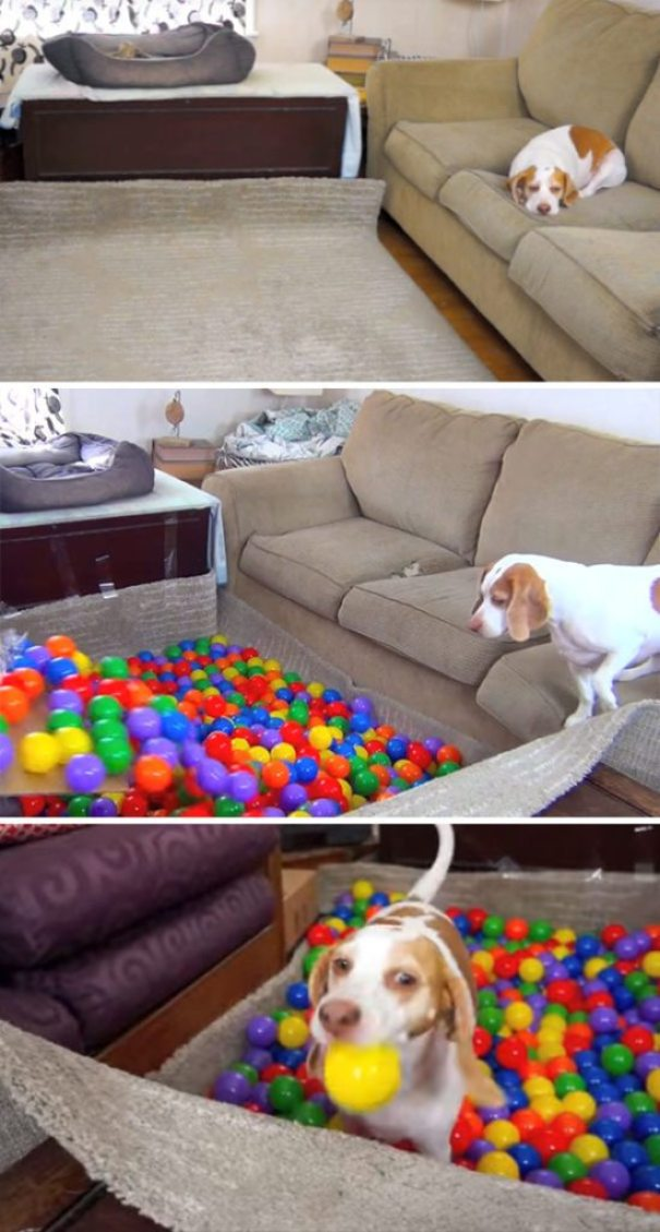 creative-dog-owners-32-57bc53157af52__605