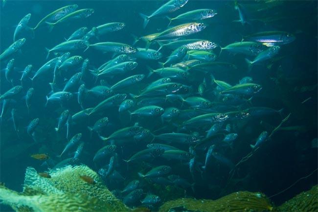 small-fish