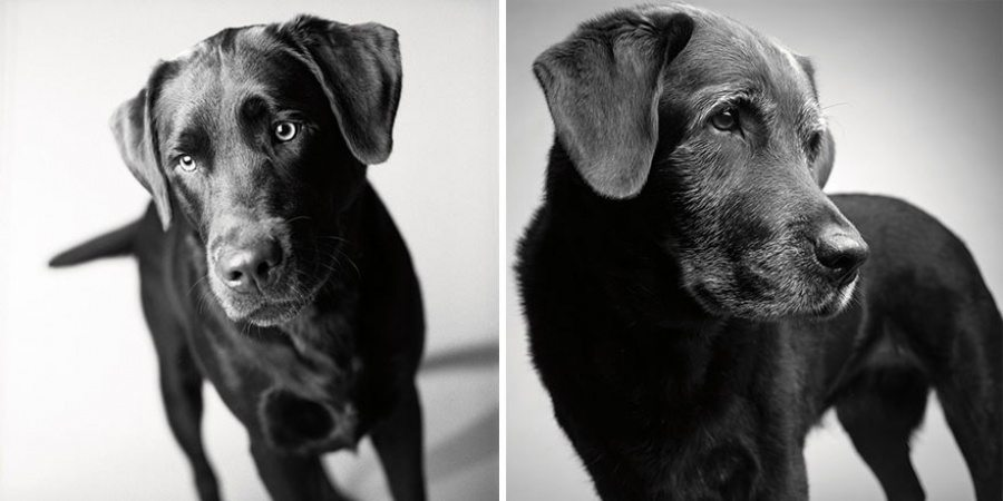 1-photography-project-dogs-getting-older