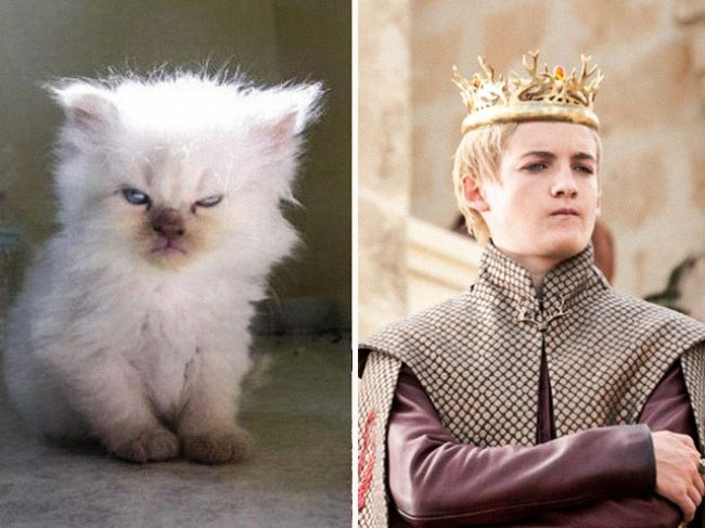 14-cats-that-look-just-like-movie-characters