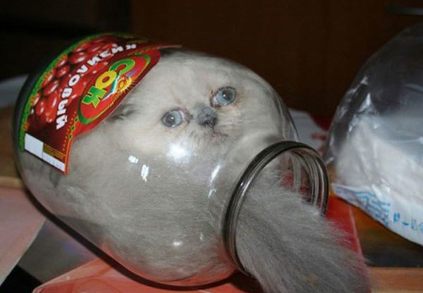 16-cats-and-the-worst-moment-of-their-9-lives