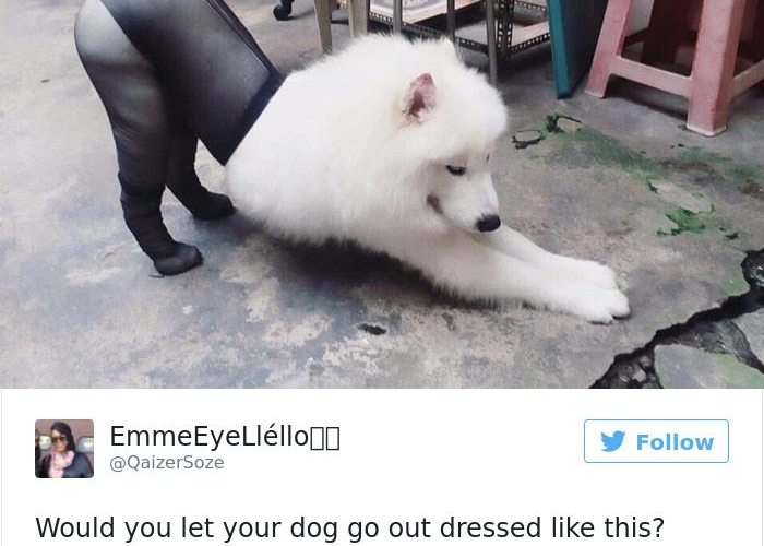8-dog-tweets-that-are-simply-priceless