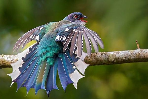 9-crazy-looking-animals-from-cuba