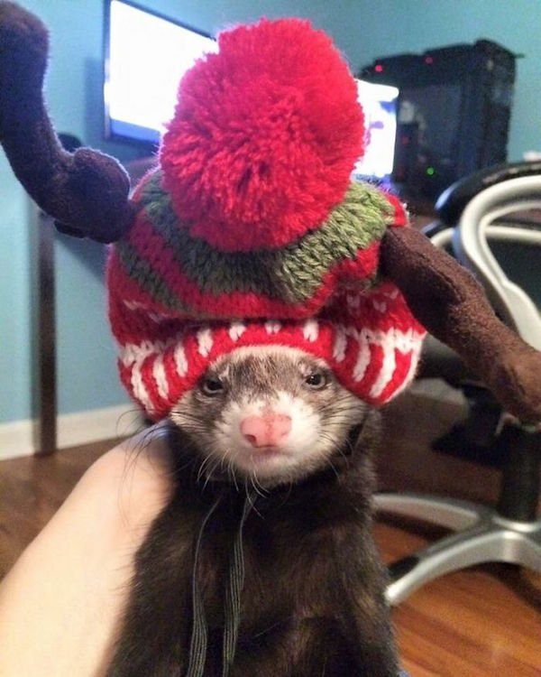 11-grumpy-pets-that-still-dont-have-the-christmas-spirit