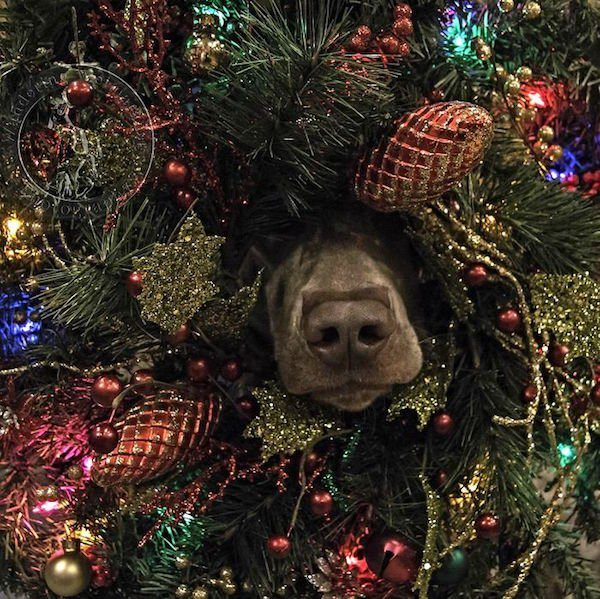 12-grumpy-pets-that-still-dont-have-the-christmas-spirit