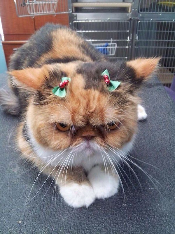18-grumpy-pets-that-still-dont-have-the-christmas-spirit