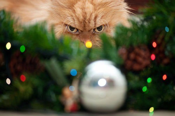 8-grumpy-pets-that-still-dont-have-the-christmas-spirit