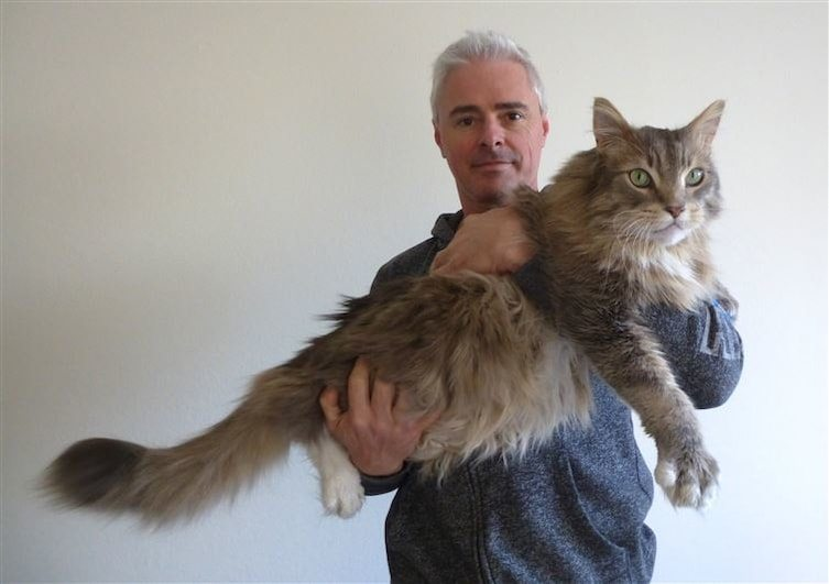 15-cats-so-large-they-seem-out-of-this-world