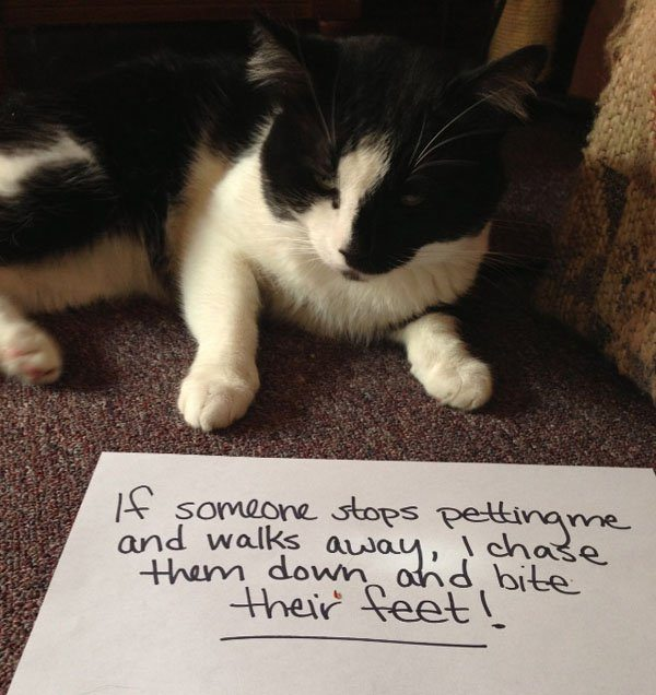 15-guilty-pets-ready-to-walk-on-hall-of-shame
