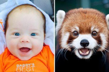 15-pics-showing-aniamls-expressing-emotion-just-like-kids