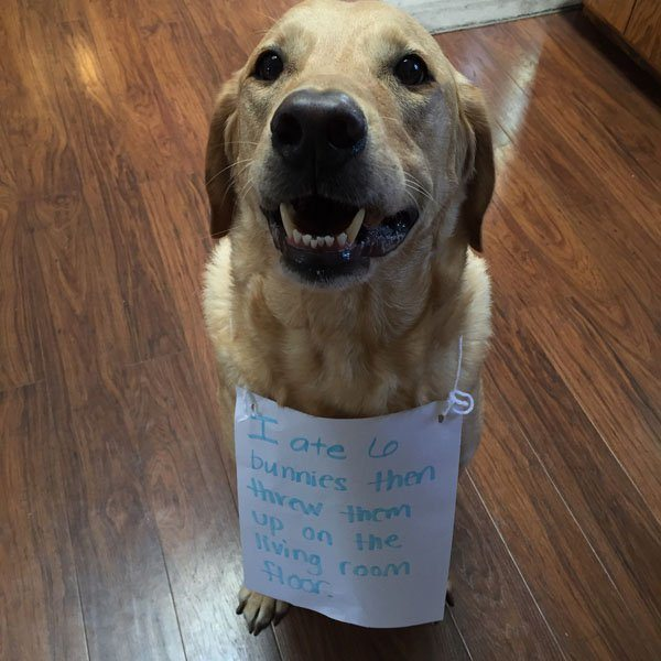 19-guilty-pets-ready-to-walk-on-hall-of-shame