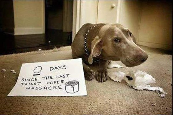 21-guilty-pets-ready-to-walk-on-hall-of-shame