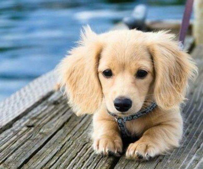 5-real-dog-breeds-that-seem-photoshopped