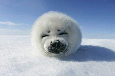 Funny-Animals-animal-humor-29016382-1920-1080
