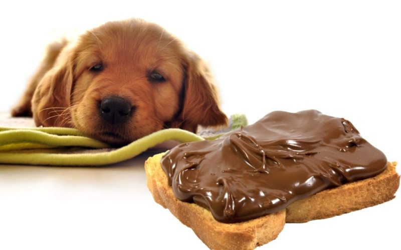 dog_vs_chocoloate