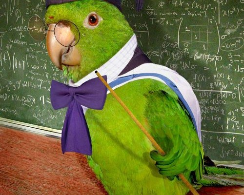 funny-parrot-teacher-teaching