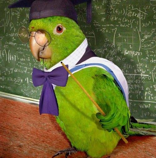 funny-parrot-teacher-teaching
