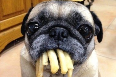 2-dog-french-fries-silly