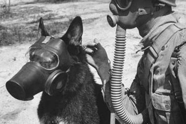 12-animals-warming-soldiers-hearts-during-war