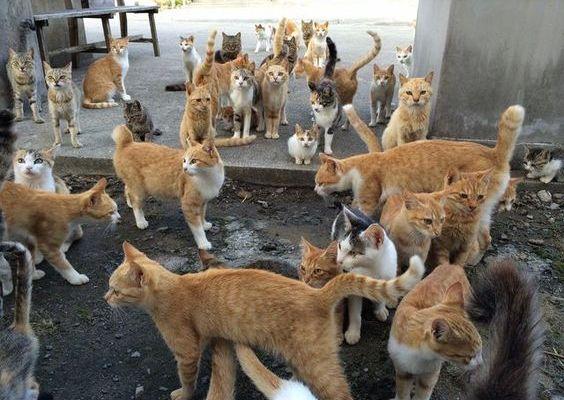 cat-lovers-3