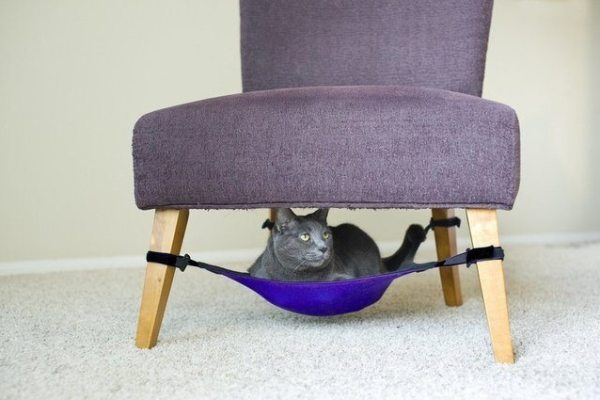 6-brilliant-products-for-your-pets