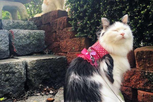 neighbor-cat-love-story-2