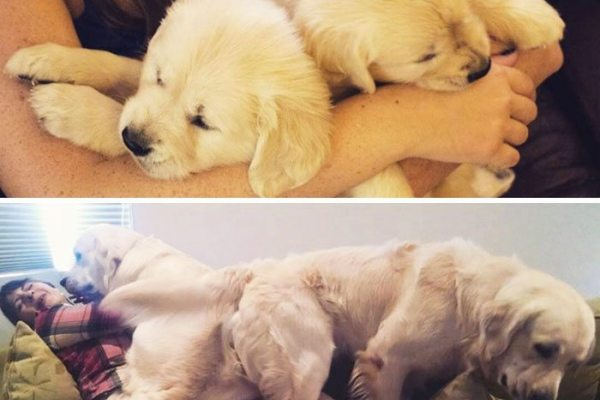 16-dogs-growing-up-adorable
