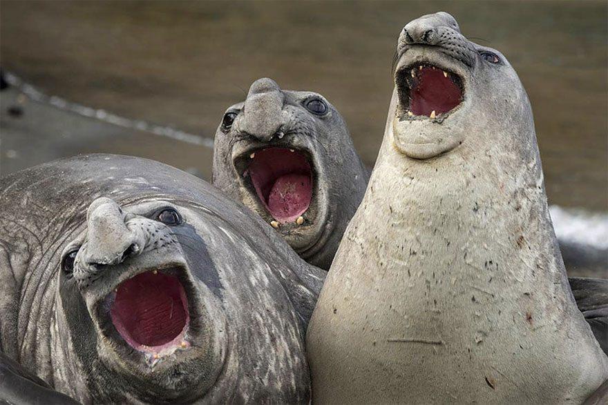 5-funniest-photos-2017-comedy-wildlife-awards