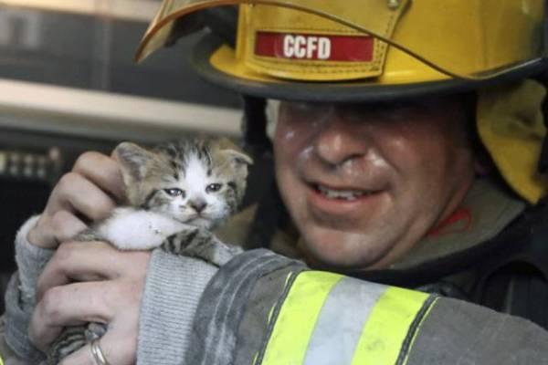 6-heartbreaking-pics-animals-saving-pets
