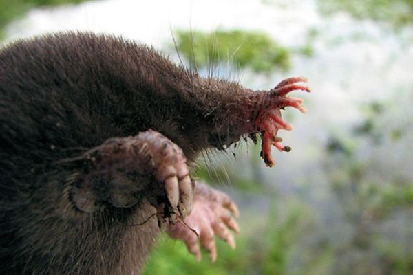 6-ugliest-animals-on-the-planet