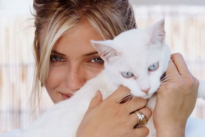 celebrities-and-cats-7