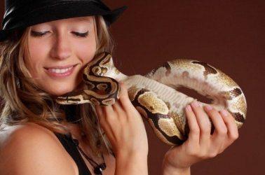 3-most-popular-animals-pets-usa