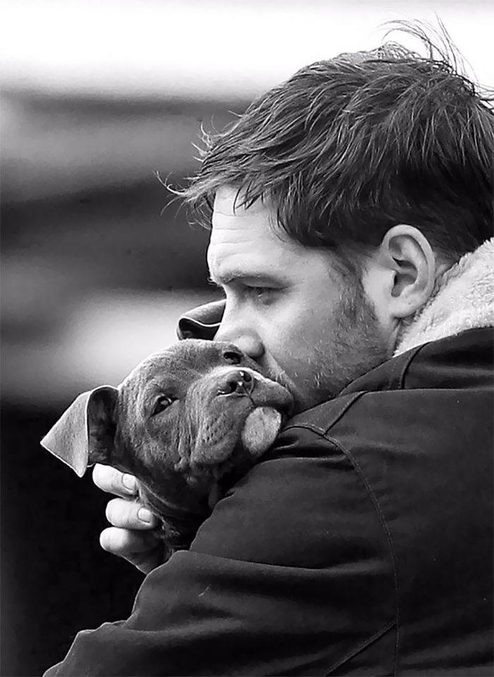 tomhardys-puppies-9