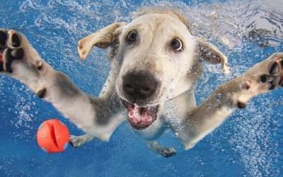 Crazy Dog….. Crazy Owner!