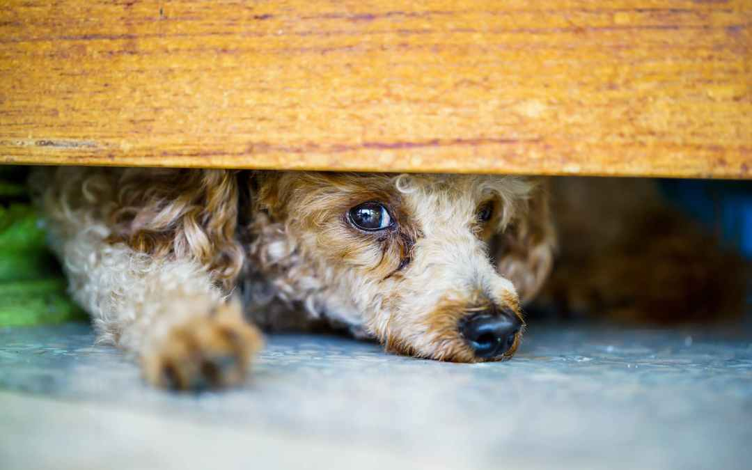 Physical Signs Your Anxious Dog Is In Trouble