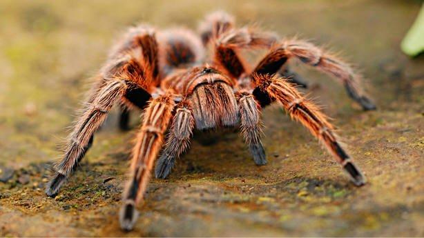 Las arañas | Información y curiosidades