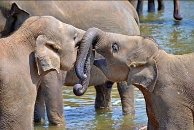 Donde viven los elefantes africanos