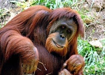 animales en riesgo de extincion