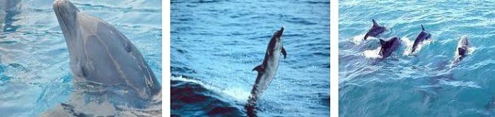 alimentacion de los delfines