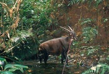 especies de animales en peligro de extincion