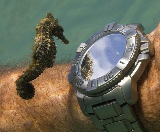El curioso caballito de mar