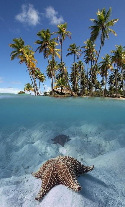 animales acuáticos - Estrella de mar