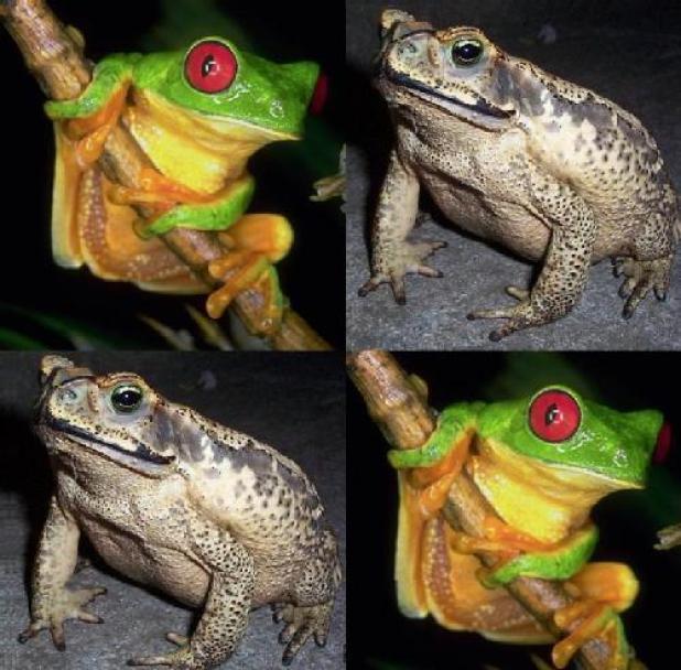 Diferencia entre sapo y rana