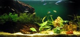 El acuario perfecto para tus peces