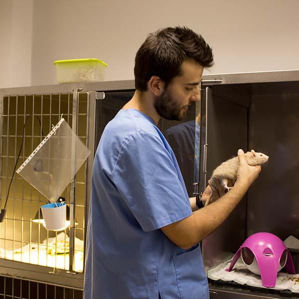 Veterinario en la zona de hospitalización para carnívoros
